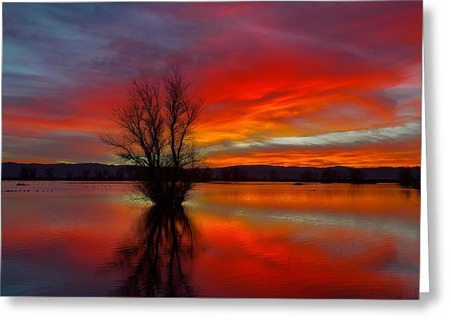 Flaming Reflections Greeting Card