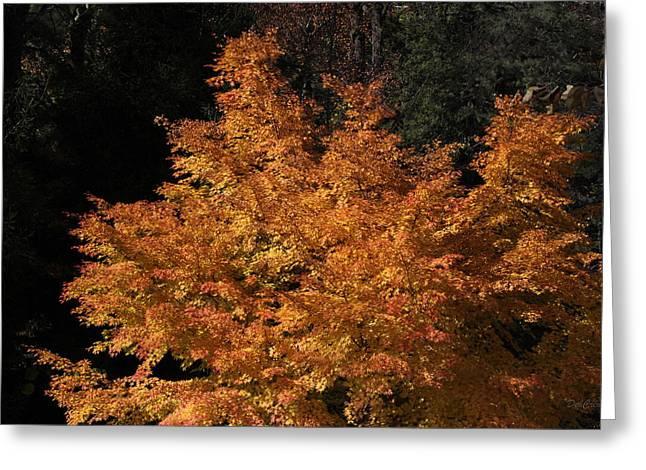 Flaming Tree Brush Greeting Card by Deborah  Crew-Johnson