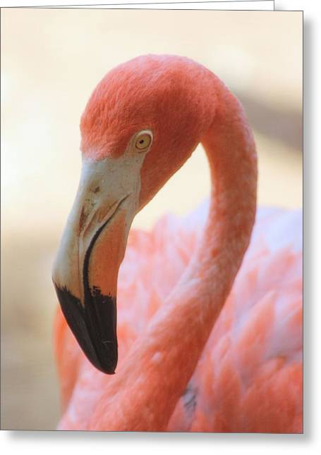 Greeting Card featuring the photograph Flamingo 2 by Elizabeth Budd