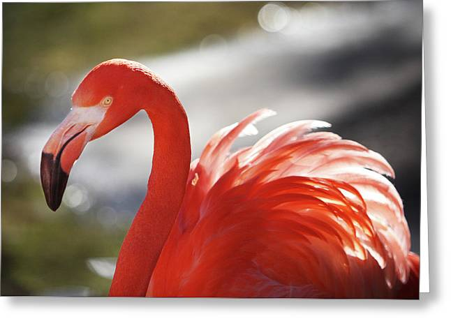 Flamingo 2 Greeting Card by Marie Leslie