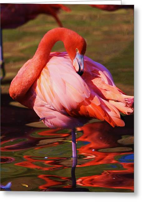 Flamingo 2 Greeting Card by Russell  Barton