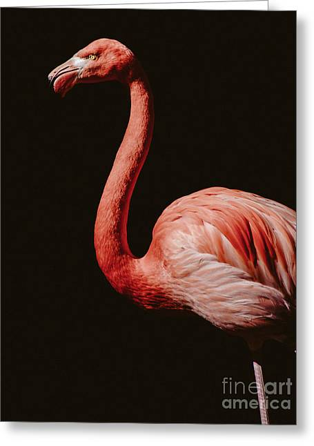 Greeting Card featuring the photograph Flamingo 7 by Andrea Anderegg