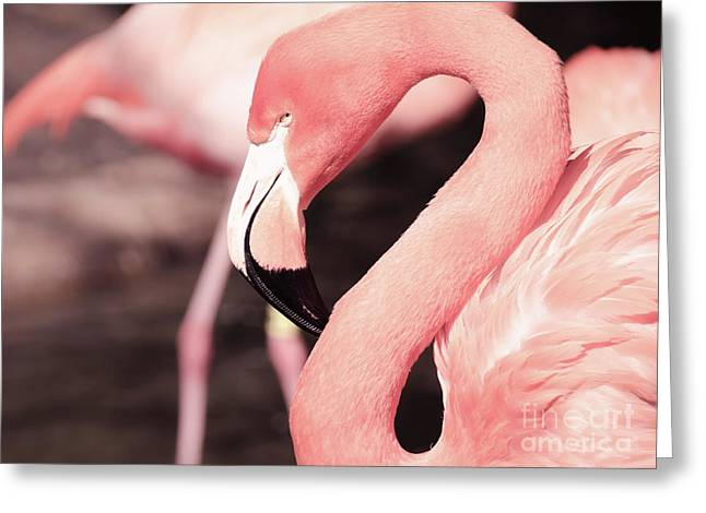 Flamingo Greeting Card by Andrea Anderegg