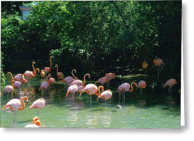 Flamingo Beauty Greeting Card by Warren Thompson