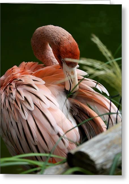 Flamingo Boudoir Greeting Card