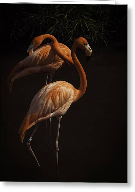 Flamingo Delight Greeting Card