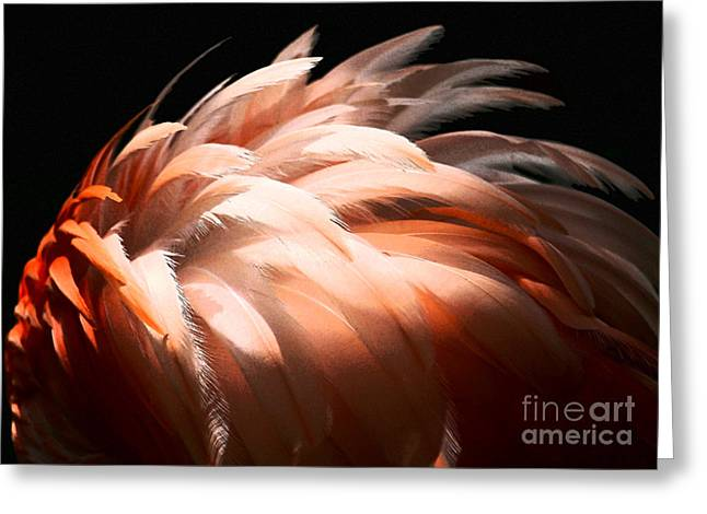 Flamingo Feathers Greeting Card by Sabrina L Ryan