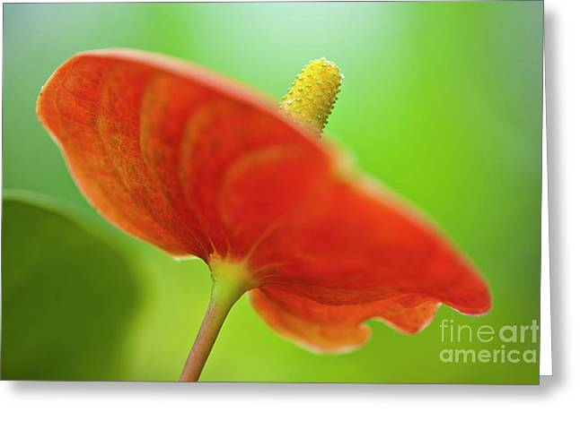 Flamingo Flower 2 Greeting Card by Heiko Koehrer-Wagner