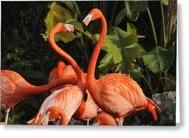 Flamingo Heart Greeting Card by Keith Lovejoy