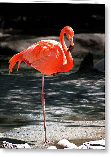 Flamingo Greeting Card by Martin Nunez
