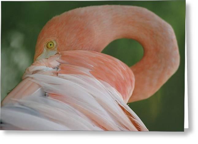 Flamingo Greeting Card by Melanie Beasley