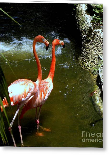 Flamingo Pair Greeting Card