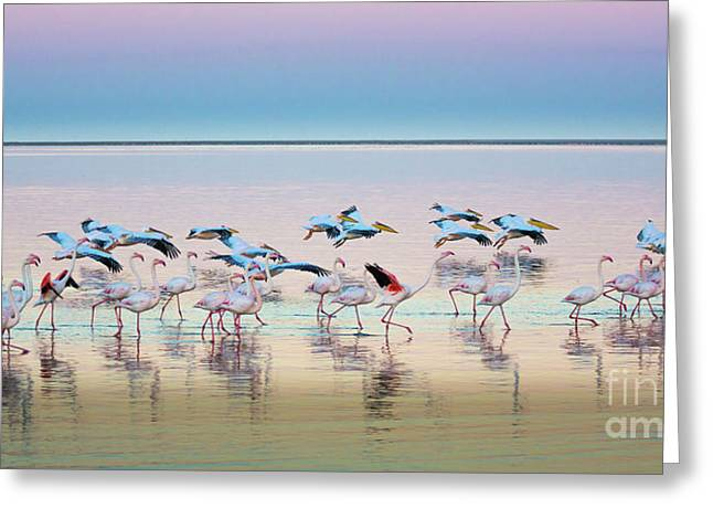 Flamingo Panorama Greeting Card by Inge Johnsson