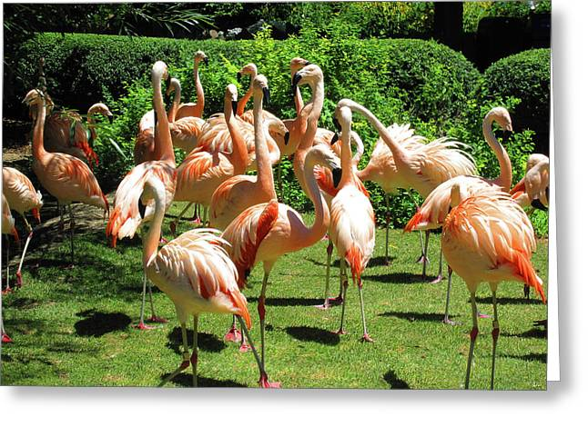Greeting Card featuring the photograph Flamingo Party by Tammy Sutherland