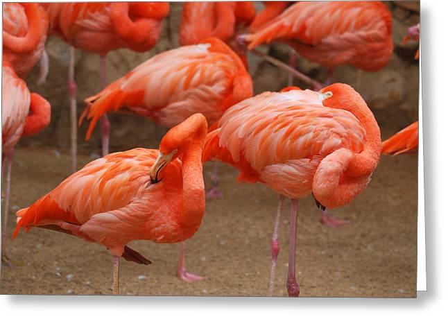 Flamingo Party Greeting Card by Teresa Blanton