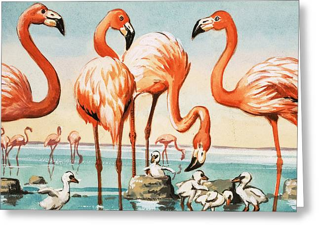 Flamingoes Greeting Card by English School
