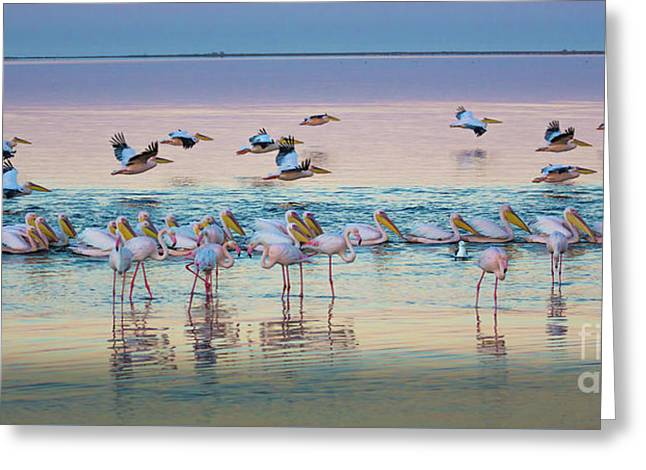 Flamingos And Pelicans Greeting Card by Inge Johnsson