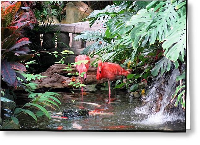 Flamingos Greeting Card