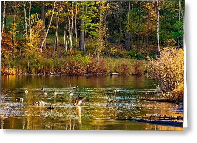Flapping For Fall Greeting Card by Steve Harrington