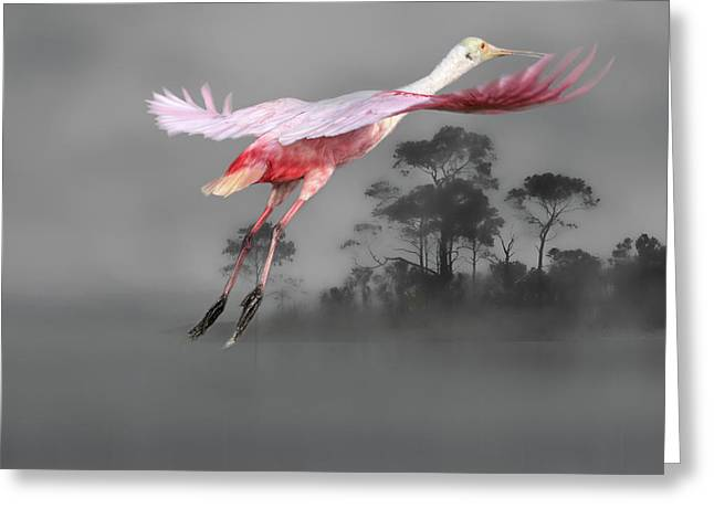 Flash Of Pink Greeting Card