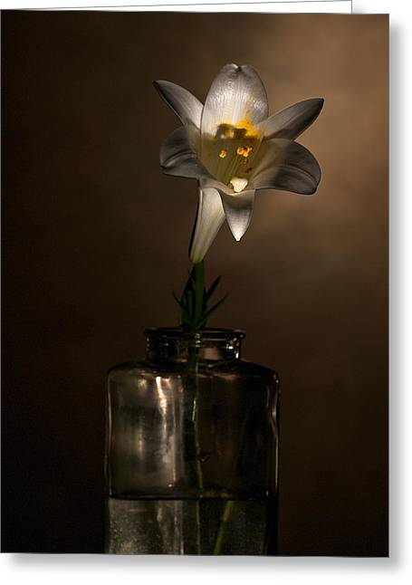 Flashlight Series Easter Lily 2 Greeting Card