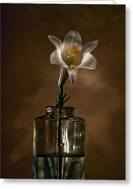 Flashlight Series Easter Lily 3 Greeting Card