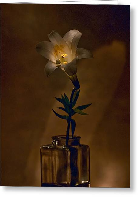 Greeting Card featuring the photograph Flashlight Series Easter Lily 4 by Lou  Novick