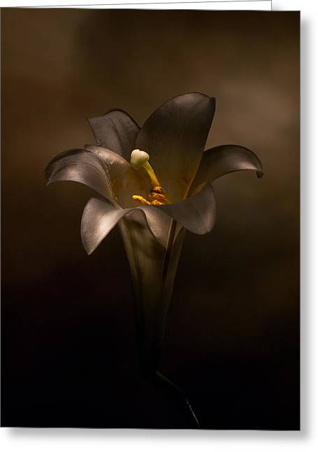 Flashlight Series Easter Lily 6 Greeting Card