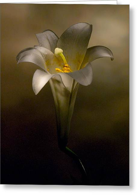 Flashlight Series Easter Lily 7 Greeting Card
