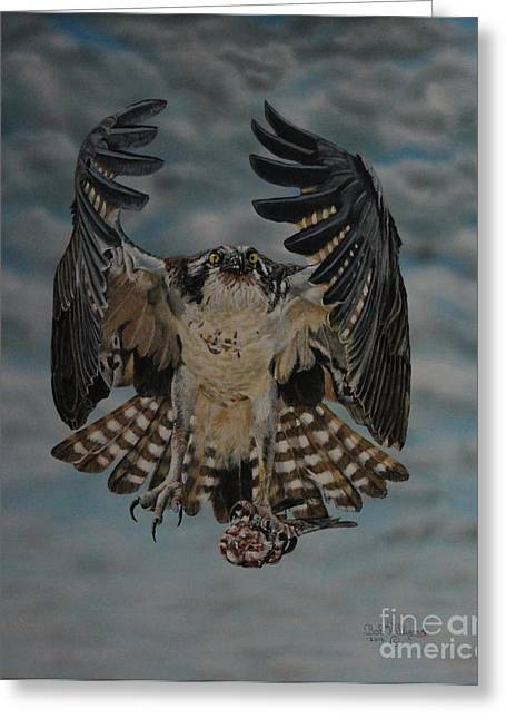 Fleck The Osprey  Greeting Card