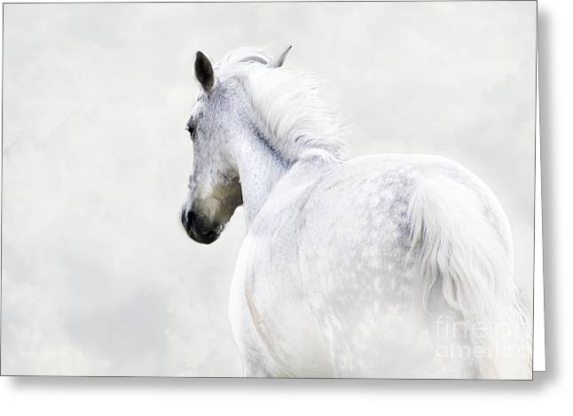 Fleeing Grey Horse Greeting Card by Ethiriel  Photography
