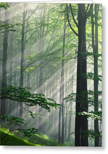 Forest Greeting Cards - Fleeting Beams Greeting Card by Evgeni Dinev