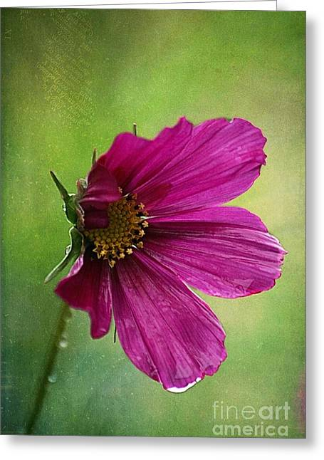 Fleurina 02 - 03t01a Greeting Card by Variance Collections