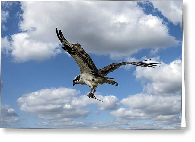 Flight Among The Clouds Greeting Card