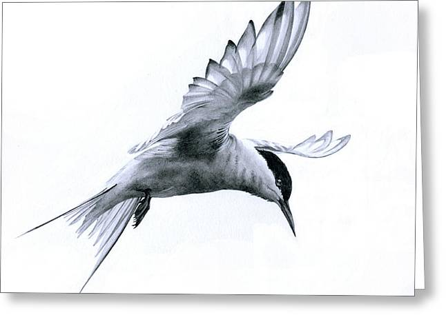 Flight - Arctic Tern Greeting Card
