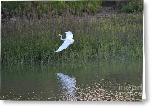 Greeting Card featuring the photograph Flight by Carol  Bradley