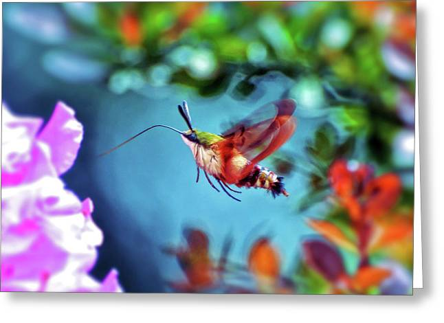 Greeting Card featuring the photograph Flight Of Mystery - Hummingbird Moth by Kerri Farley