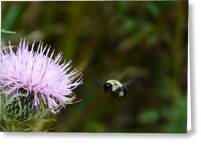Flight Of The Bumblebee Greeting Card