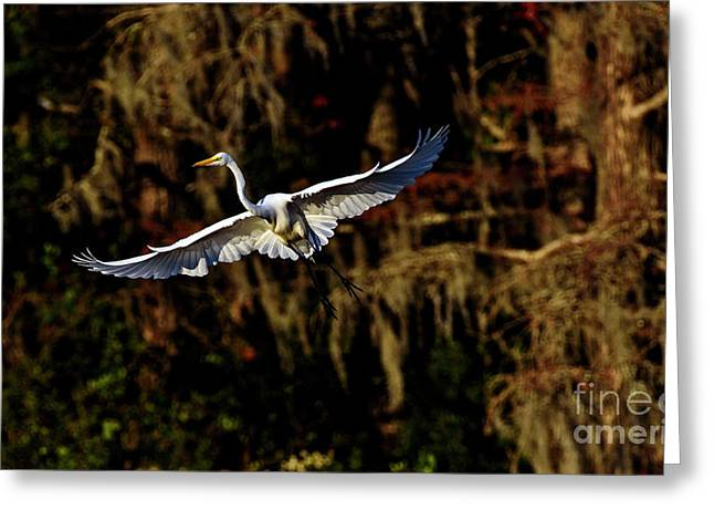 Greeting Card featuring the photograph Flight Of The Egret by DJA Images