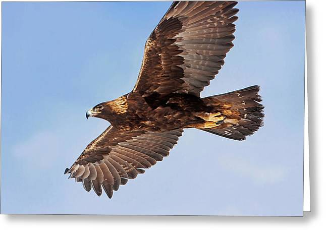 Flight Of The Golden Eagle Greeting Card