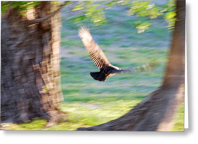 Greeting Card featuring the photograph Flight Of The Heart by Teresa Blanton