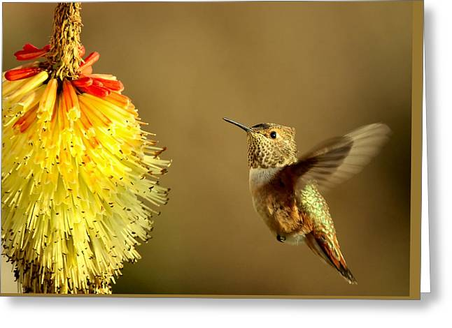Flight Of The Hummer Greeting Card