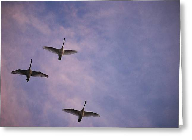 Flight Of The Swans  Greeting Card by Michelle  BarlondSmith