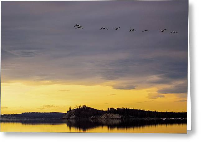 Flight Over Goose Bay Greeting Card by Ron Day