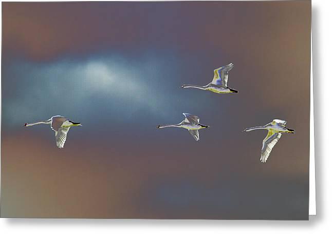 Flight Greeting Card by Richard Patmore