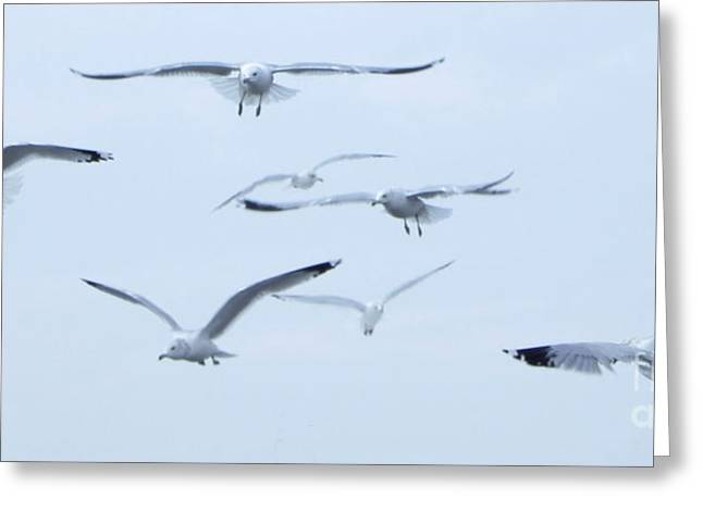 Flight Greeting Card by Steve Rudolph