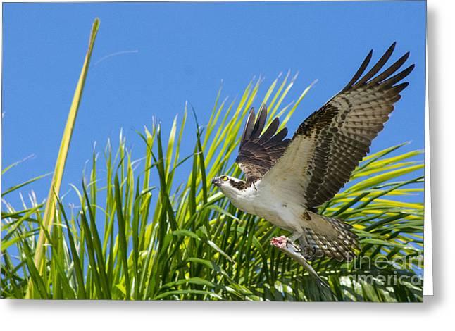 Flight Through The Palms Greeting Card