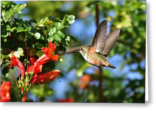 Flight To The Flower I Greeting Card by Linda Brody