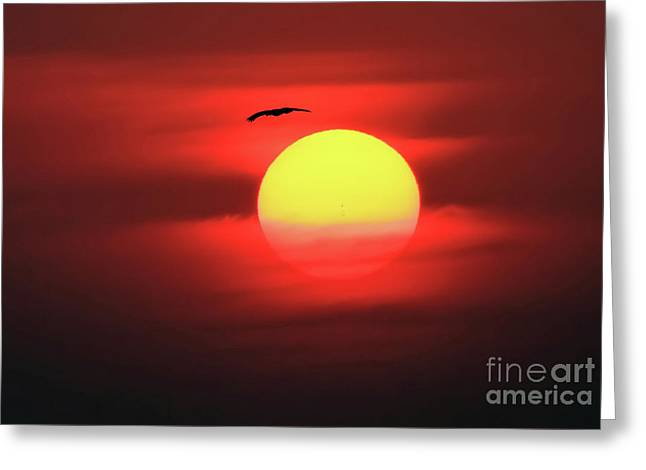 Flight To The Sun Greeting Card