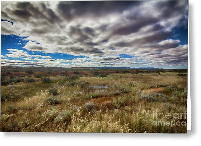 Greeting Card featuring the photograph Flinders Ranges Fields  by Douglas Barnard